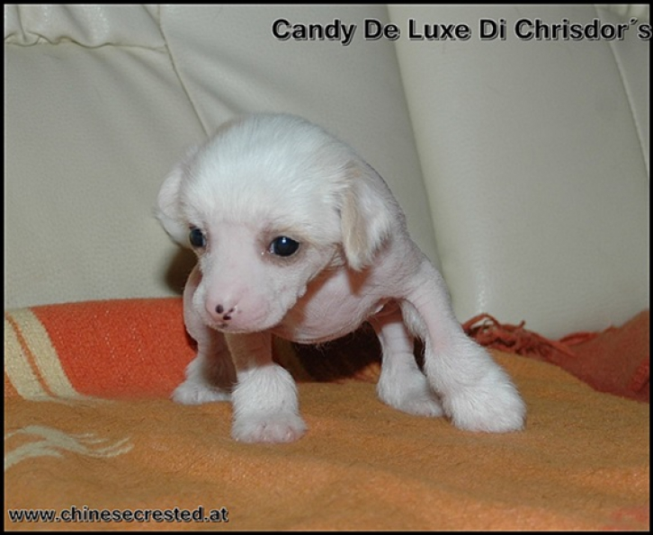 Candy De Luxe Di Chrisdors