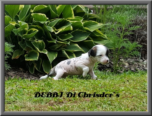 Debbi Di Chrisdor´s